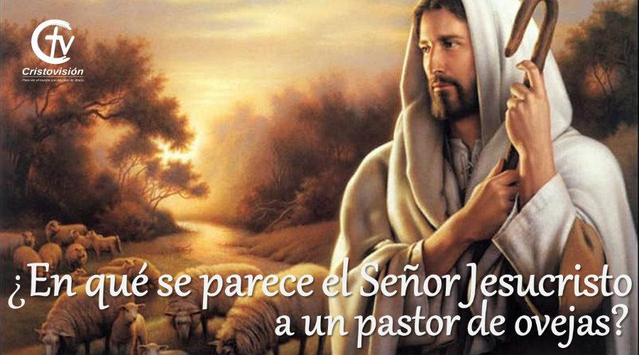 ¿En qué se parece el Señor Jesucristo a un pastor de ovejas?